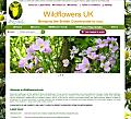Wildflowers UK